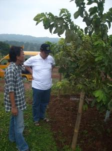 Prof.Dr.H.Abdul Djamil,MA mendapat penjelasan dari Area Manager Kebun Ngebruk